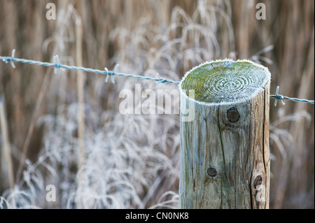 Frosty barbed wire and fence post in the english countryside. Shallow DOF - Stock Photo