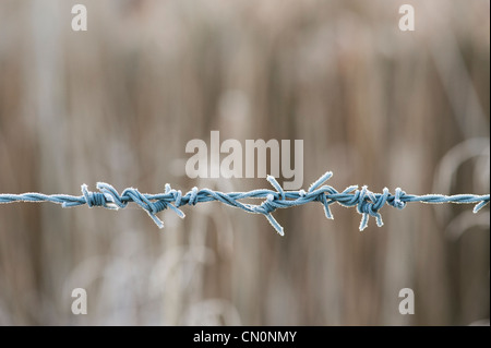 Frosty barbed wire. - Stock Photo