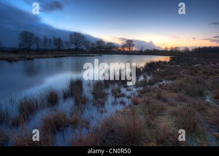 A lake in a moor, just before sunrise. Purple Moor Grass (Molinia caerulea) and Soft Rush (Juncus effusus) growing - Stock Photo