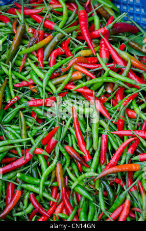 chilli peppers and the southeast asian identity Southeast asia's food is one of the top reasons to go - when you do,  spices  such as garlic, chili, and coriander lend the famous dish an indian influence   identity being washed away by southeast asia's competing powers.