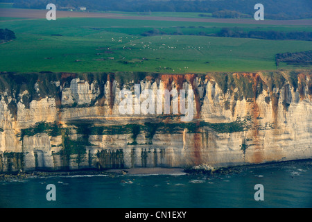 France, Seine Maritime, cattle herd along the cliffs south of Etretat (aerial view) - Stock Photo