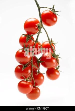 Several Cherry Tomatoes on Vine - Stock Photo