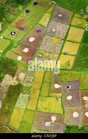 Harvest of paddy rice fields, aerial view, Moshi, Kilimanjaro Region, Tanzania - Stock Photo