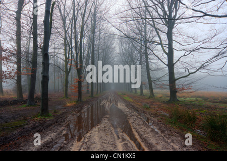 Puddles and mud: a country road in winter. - Stock Photo