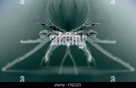 X-ray image of a spider - Stock Photo