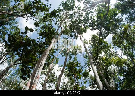 Trees, low angle view - Stock Photo