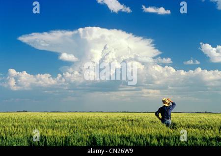 Farmer viewing Cumulonimbus Cloud Mass from Barley Field, near Carey, Manitoba - Stock Photo