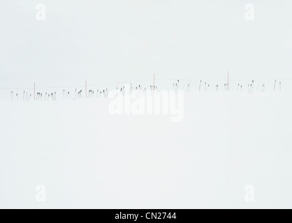 Ski poles in the snow, Lake Tahoe, California, USA - Stock Photo