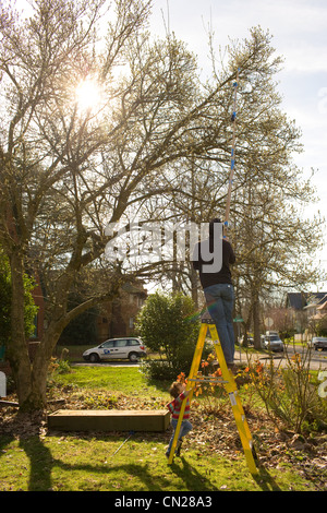 Man pruning trees in garden on stepladder - Stock Photo