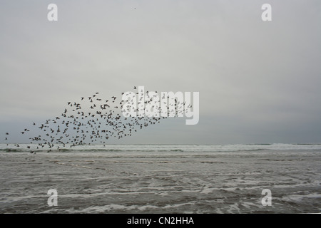 Flock of birds flying over water - Stock Photo