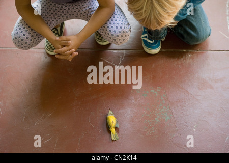 Two children looking at dead bird - Stock Photo