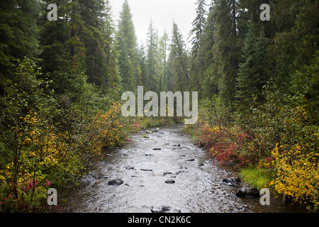 Misty River in Forest, Montana, USA - Stock Photo