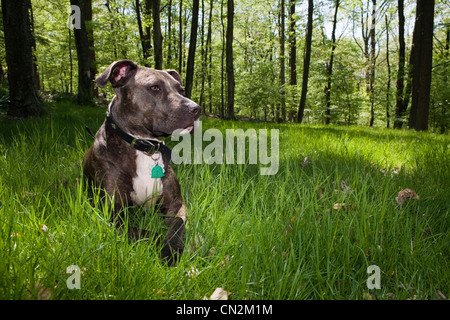 Dog sitting in grass in forest - Stock Photo