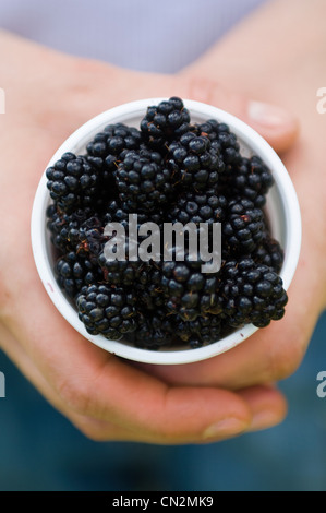 Person holding blackberries - Stock Photo