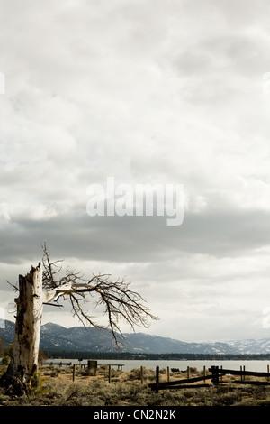 Dead tree, Lake Tahoe, California, USA - Stock Photo