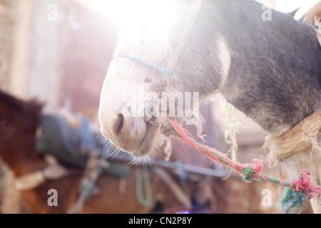 Donkey's head, crop - Stock Photo