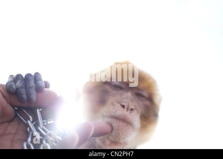Hand stroking monkey - Stock Photo