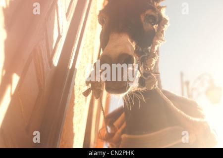 Donkey, low angle view - Stock Photo