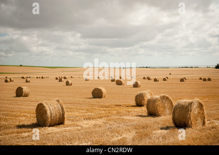Round hay bales in field - Stock Photo