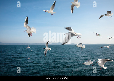 Seagulls flying over sea - Stock Photo