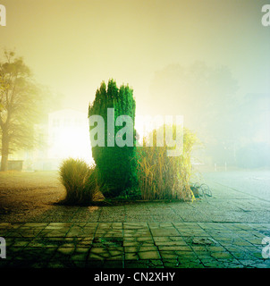 Bushes in fog at night - Stock Photo