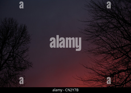 Trees against pink sky at sunset - Stock Photo