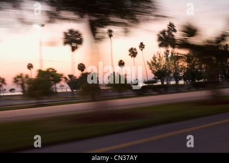 Palm trees at roadside, Miami, Florida, USA - Stock Photo