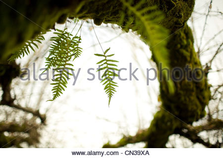 Green moss and fern on tree - Stock Photo