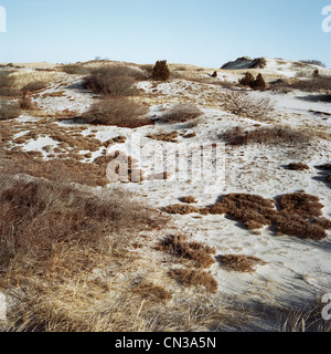 Sand dunes, Sandy Neck, Cape Cod, USA - Stock Photo
