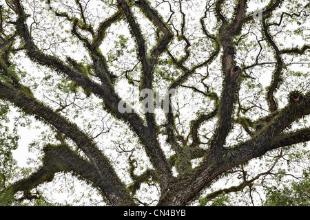 Branches of tropical tree covered with fern, Luang Prabang, Laos - Stock Photo