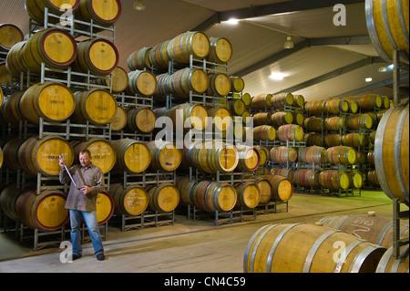 Australia, South Australia, La Clare Valley, O'Leary Walker cellar, Matt Logan is checking the quality of the wine - Stock Photo