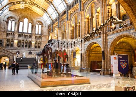 Foyer Museum London : Natural history museum london main bulding tower stock photo