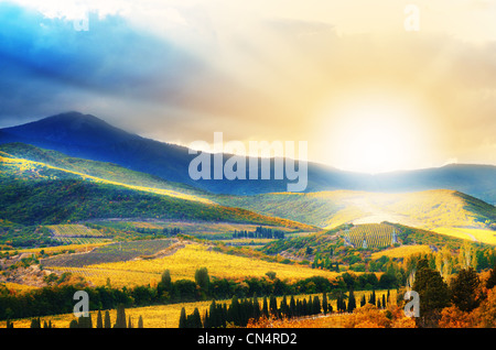 Hills with vineyards on sunset time in Crimea Ukraine