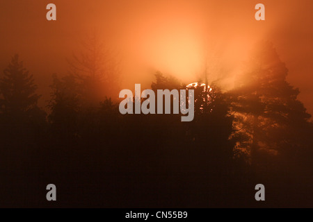 Poland, Podlaskie, Bialowieza forest, listed as World Heritage by UNESCO and biosphere reserve, sunrise on the Bialowieza - Stock Photo