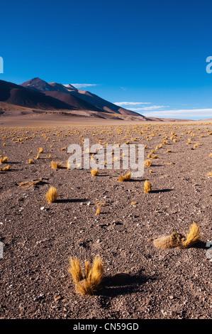 Chile, Antofagasta Region, Atacama Desert, Salar de Talar - Stock Photo