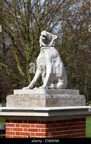 Replica statues of The Dogs of Alcibiades standing guard on plinths near Bonner gate, Victoria Park, London, England, - Stock Photo