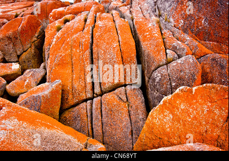 Granite rocks covered in orange lichen on the Tasmanian East coast - Stock Photo