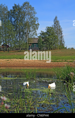 two white geese on river against village - Stock Photo