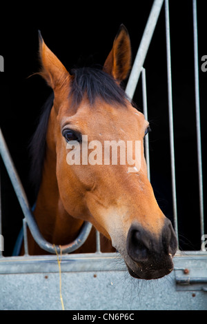 'Finellas Fortune' at Middleham Open Stables Day, Good Friday 2012 on the 6th April at Leyburn, North Yorkshire - Stock Photo