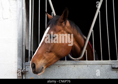 Middleham Open Stables Day, Good Friday 2012 on the 6th April at Leyburn, North Yorkshire Dales, UK - Stock Photo