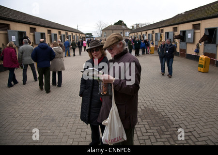 Horses in Stables. Visitors at Middleham Open Stables Day, Good Friday 2012 on the 6th April at Leyburn, North Yorkshire - Stock Photo