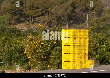 Stacked crates full of freshly picked oranges - Stock Photo