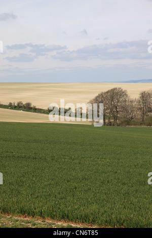 Bratton Downs, Wiltshire, England - Stock Photo