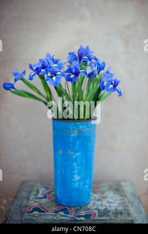 Iris flowers in a  blue painted rusted metal pot. - Stock Photo