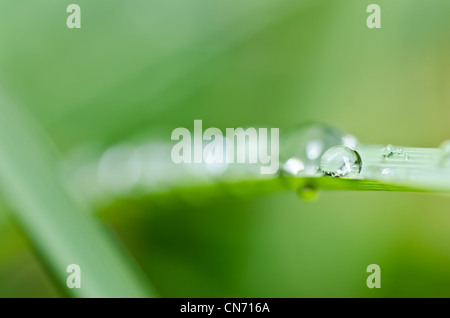 fresh water drops in green nature or in forest - Stock Photo