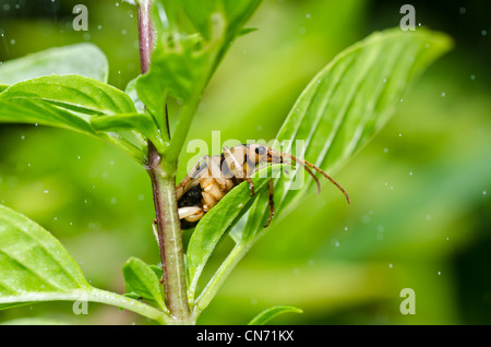 brown bug in green nature or in the garden - Stock Photo