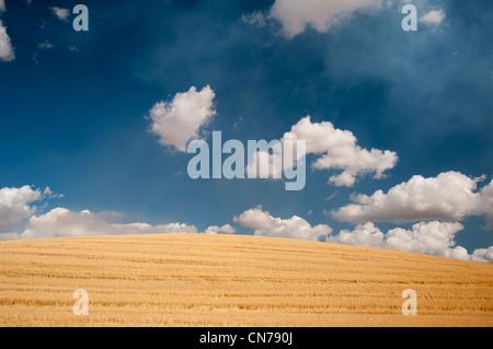 Wheat fields and puffy clouds in Waitsburg near Walla Walla, Washington State USA - Stock Photo