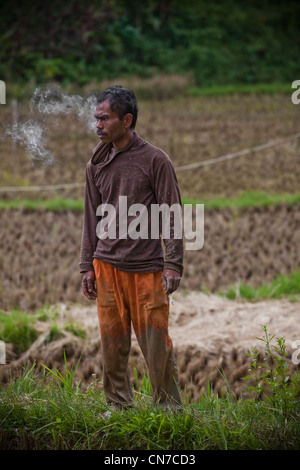 Local People Working In Rice Fields, Rantepao Toraja Sulawesi Indonesia, Pacific, South Asia - Stock Photo