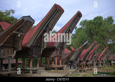 Traditional houses in Tana Toraja. Rantepao, Sulawesi, Indonesia, Pacific, South Asia. - Stock Photo