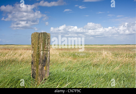 An old, forgotten, weathered beach pole on a salt marsh under a blue sky with some clouds. - Stock Photo